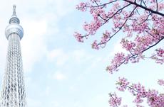 外国人観光客から見る「東京の魅力」は?