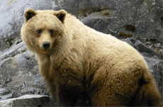 クマだけじゃない…「人食い」生物に要注意!